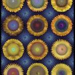 """Fibonacci Sunflowers"" by AnnStretton"