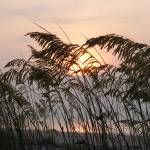 """sea oats 2"" by gfrizenphoto"