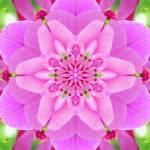 """""""LP Mandala"""" by onenesspixels"""