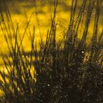 """""""Amber Showers"""" by GABrittImages"""