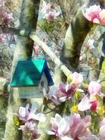 Birdhouse in Magnolia