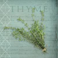 Classic herbs series: Thyme