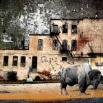 """buffalobuilding"" by tomgreaves"