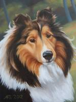 Portrait of Sheltie
