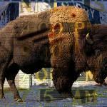 """buffalolaundry"" by tomgreaves"