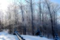Winter Scene  -soft focus