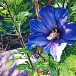 """Rose of Sharon"" by KellyEddington"