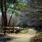 """River Path 1  Bayard Cutting Arboretum - Great Riv"" by flowerchild6482"