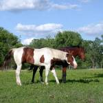 """Horses"" by blackmonam"