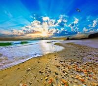 Vibrant Blue Sun Rays Burst above Beach Shells