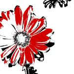 """Gerbera - Black White And Red Series"" by bettynorthcutt"