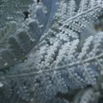 """""""Soft white leaves"""" by liv-ellingsen"""