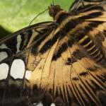 """""""Butterfly 11"""" by liv-ellingsen"""