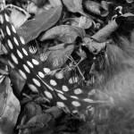 """Turkey feather, Nashville"" by liv-ellingsen"
