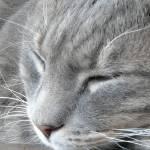 """Sleeping cat, Waiheke"" by liv-ellingsen"