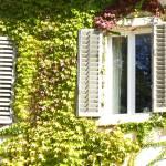 """""""Cat in the window"""" by liv-ellingsen"""