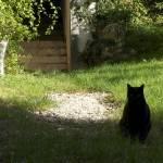 """""""Cat in the garden"""" by liv-ellingsen"""