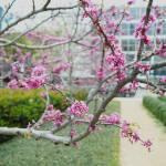 """sakura"" by bravolesfilles"
