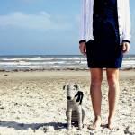 """socrat dog at the beach"" by bravolesfilles"