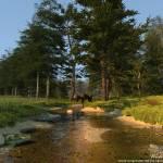 """""""Water road"""" by Evgen3d"""