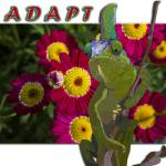 """Adapt"" by car2ner"