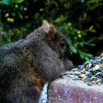 """A Feast fit for a Squirrel"" by ROBERTSCOTTPHOTOGRAPHYY"