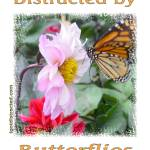 """600-butterfly-dsc04155-distracted"" by quotes"