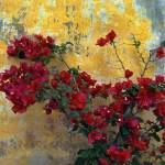 """Bougainvillea By Mission Wall"" by Lawrence"
