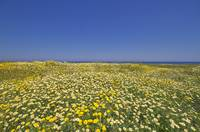 Puglia Landscapes,Savelletri,Pennegrande beach, st