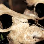"""""""bone"""" by i2i"""