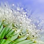 """Spring Angels"" by ImageMonkey"