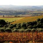 """""""Cape Town Vineyards"""" by RIANA"""