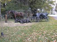Horse and Buggy in Elroa ON