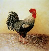 Speckled Rooster (acrylic on canvas)