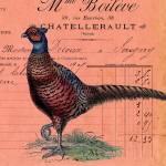 """Vintage Pheasant"" by angelandspot"