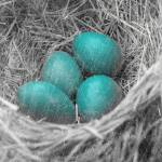 """Robin Eggs Grunge"" by angelandspot"