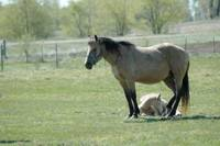 Mare Guarding Her Foal
