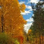 """Golden Trail #2  Cle Elum, WA Coal Mine Trail"" by budo"