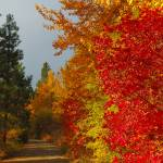 """Golden Trail #1  Cle Elum WA  Coal Mine Trail"" by budo"