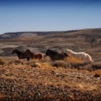 Wild Horses by Jim Westin