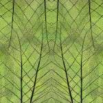 """Leaf Symmetry Green"" by CoraNiele"