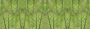 Leaf Symmetry Green