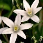 """Wild Flowers"" by meadowhawk"