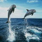"""""""Double Dolphin Air"""" by netbrands"""