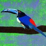 """Aracari out on a limb"" by LimeCreekArt"