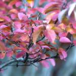 """""""Fall Foliage"""" by GreyPhotography"""