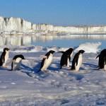"""Penguin Place"" by netbrands"