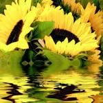 """""""SunflowerDays"""" by atouchofelegance"""
