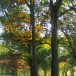 """Hint of Autumn"" by susansartgallery"