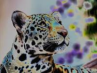 Leopard in Color Art